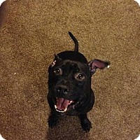 Adopt A Pet :: Nyx (COURTESY POST) - Baltimore, MD