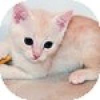 Adopt A Pet :: Porgie - Vancouver, BC
