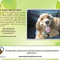 Adopt A Pet :: Max - Ottawa, ON