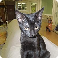 Adopt A Pet :: Teaser - Medina, OH