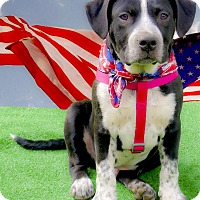 Adopt A Pet :: Sabaka of best temperament - Sacramento, CA