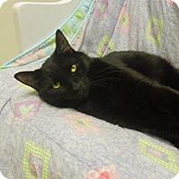 Adopt A Pet :: Sonic - Medina, OH