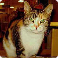 Adopt A Pet :: Camilla - Colmar, PA