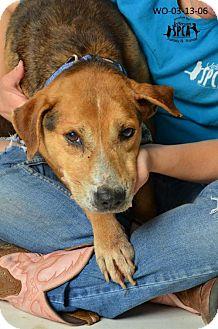 Shepherd (Unknown Type) Mix Dog for adoption in Marrero, Louisiana - Doe - In Foster