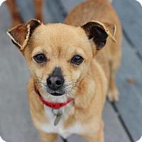 Adopt A Pet :: Pie - Smyrna, GA