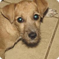 Adopt A Pet :: Elisa - Rocky Mount, NC