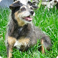 Adopt A Pet :: Abigail - FOSTER Needed - Los Angeles, CA
