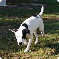 Adopt A Pet :: Flora - Boston, MA