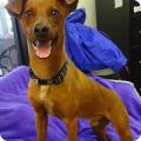 Terrier (Unknown Type, Medium) Mix Dog for adoption in Deer Park, Texas - Barney