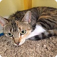 Adopt A Pet :: Ashley - Port Richey, FL