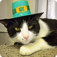 Adopt A Pet :: Mr. Big - Umatilla, FL