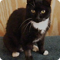 Adopt A Pet :: Mookie - Transfer, PA