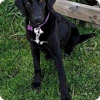 Adopt A Pet :: Shyanne - Coldwater, MI
