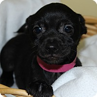 Adopt A Pet :: Fallon - Waldorf, MD