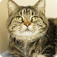 Adopt A Pet :: Otto - East Hartford, CT