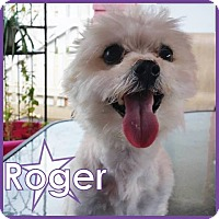 Adopt A Pet :: Roger - Excelsior, MN