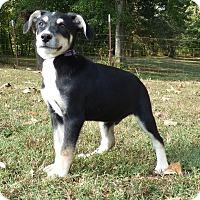 Adopt A Pet :: Val - Newburgh, NY