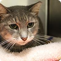 Adopt A Pet :: Opal - Sarasota, FL