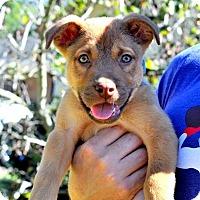 Adopt A Pet :: Leroy - Portland, OR