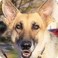 Adopt A Pet :: Lillie - Gretna, NE