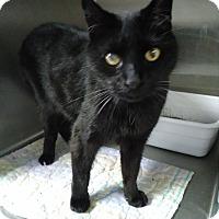 Adopt A Pet :: Ramses - Hinesville, GA