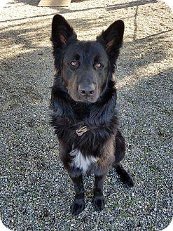 Siberian Husky/German Shepherd Dog Mix Dog for adoption in Lompoc, California - Oso