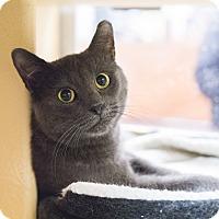 Adopt A Pet :: Gracie - Toronto, ON