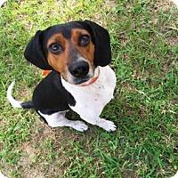 Adopt A Pet :: Jack - Gainesville, FL