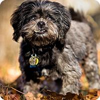 Adopt A Pet :: Rocky - Verona, NJ