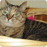 Adopt A Pet :: Cassandra - Pascoag, RI