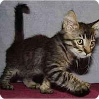 Adopt A Pet :: Chase - Modesto, CA