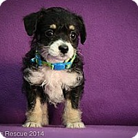 Adopt A Pet :: Fritz - Broomfield, CO