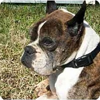 Adopt A Pet :: Walter - Thomasville, GA