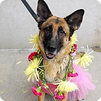 Adopt A Pet :: Maddilynn - Detroit, MI