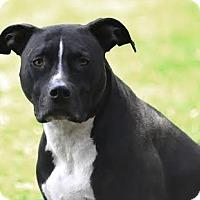 Adopt A Pet :: Felix - Van Nuys, CA
