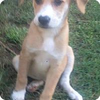 Adopt A Pet :: Paulie - North Brunswick, NJ