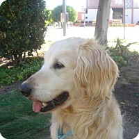 Adopt A Pet :: Denver - Los Angeles, CA