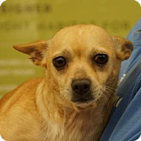 Adopt A Pet :: Amy (Donkey) - Martinez, GA