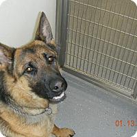 Adopt A Pet :: MAX - Sandusky, OH