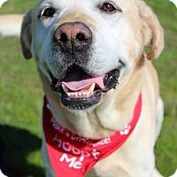 Adopt A Pet :: Carter - Grants Pass, OR