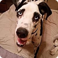 Adopt A Pet :: Chloe - Austin, TX