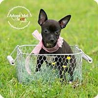 Adopt A Pet :: Cleopatra - Pearland, TX