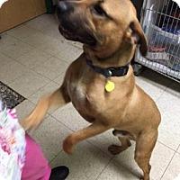 Adopt A Pet :: Finnigan- Ohio - Fulton, MO