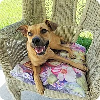 Adopt A Pet :: Axel - Umatilla, FL