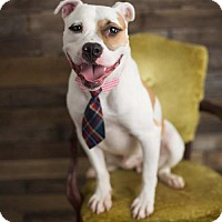 Pit Bull Terrier Mix Dog for adoption in Media, Pennsylvania - Titus