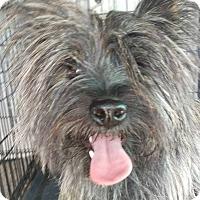 Adopt A Pet :: Arnold - Las Vegas, NV
