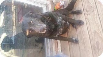 Belgian Shepherd Mix Dog for adoption in Phoenix, Arizona - Grim