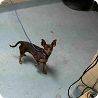 Adopt A Pet :: A095419 - Tulsa, OK