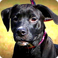 Adopt A Pet :: Hattie - Glastonbury, CT