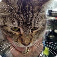 Adopt A Pet :: Mya aka Oscarina - Yuba City, CA
